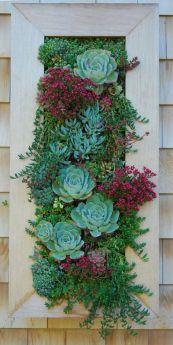 gradina verticala perete vegetal