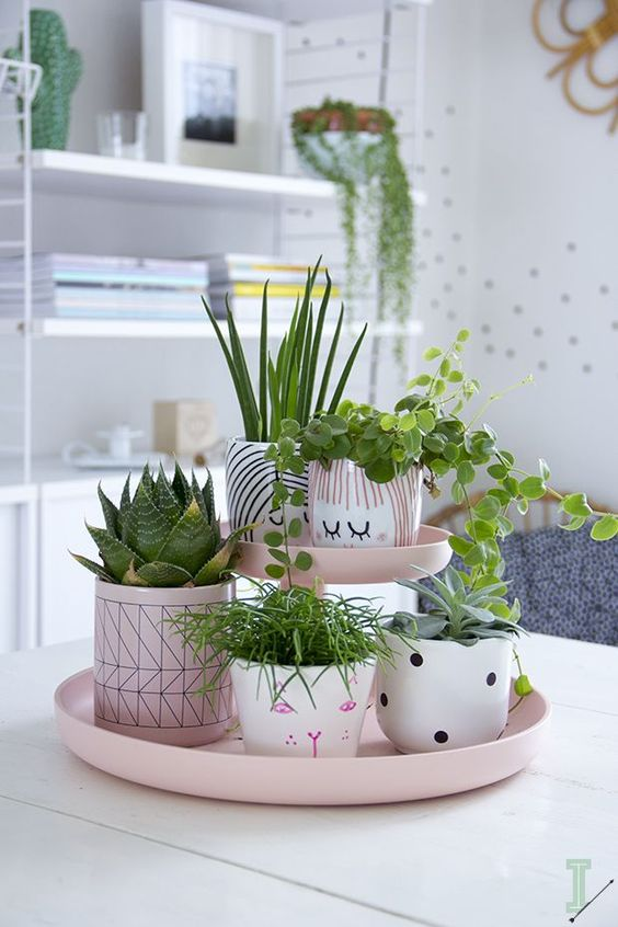 ghivece plante verzi